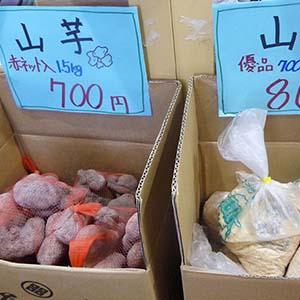 兵庫県東条産 山芋